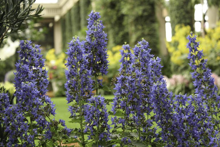 Longwood gardens live love sophia - Places to eat near longwood gardens ...